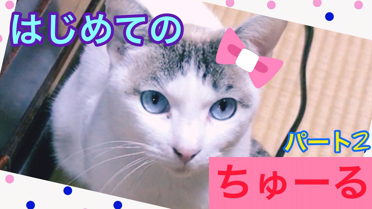 【猫】劇団員実家猫にはじめてのちゅーるあげてみた!パート2